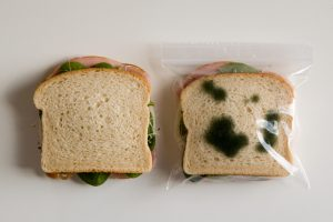 lunch sandwich fungi